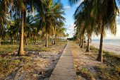 Pathway through coconut palms on tropical beach
