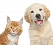 stock photo of coon dog  - Cat and dog - JPG