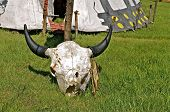 stock photo of cow skeleton  - Cow skull skeleton with horns is located in front of a tent - JPG