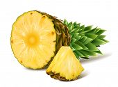 Tropical ripe fresh pineapples. Vector illustration.