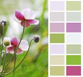 Anemone Japanese in pastel color chart palette swatches