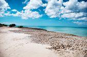 Famous Palm beach on Aruba in the Caribbean