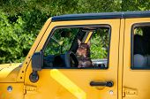 Adorable little brown dog wearing a collar peering out of a vehicle with an alert expression as it k