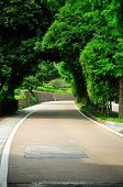 Tree Covered Road