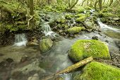 Brook and mossy stone