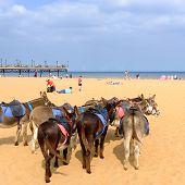 Donkeys on Skegness beach.