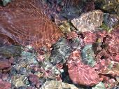 Streambed With Colored Stones
