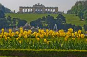 image of schoenbrunn  - Yellow tulips in front of Gloriette building at the top of Schenbrunn park and palace in Vienna - JPG