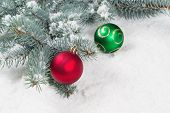 picture of blue spruce  - Closeup horizontal image of Christmas ornaments red and green hanging from a real Blue Spruce tree branch placed on snow - JPG