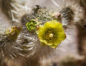 Barrel Cactus Plant In Anza Borrego Desert