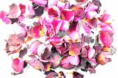 Red Dried Roses
