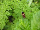 Bug tell-tale