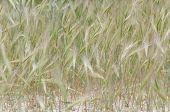 Green herbal background of bushy fresh grass
