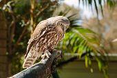 owl at Currumbin Wildlife Park