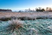 Morning Frost On Marsh In Winter