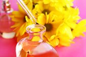 Dropper bottle of perfume with yellow chamomile on pink background
