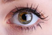 picture of eye-wink  - Human eye close up - JPG