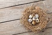 image of quail egg  - Quails eggs in nest on rustic wooden background with copy space - JPG