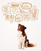 image of collie  - Cute brown and white border collie with barking speech bubbles above his head - JPG