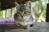 stock photo of attention  - Lovely Kitten - JPG