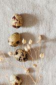stock photo of quail egg  - quail eggs on linen - JPG
