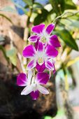 picture of violet  - Beautiful orchids flowers Close - JPG