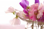 image of sweet pea  - Bouquet of beautiful sweet peas flowers, a studio photo