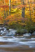 River And Fall Foliage, New Hampshire (vertical)