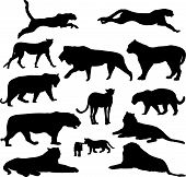 Big Cats Silhouette Collection