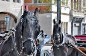image of stagecoach  - Two vehicles with Horses in city Antwerp - JPG