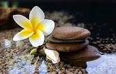 Plumeria Or Frangipani Decorated On Water And Pebble Rock In Zen Style poster