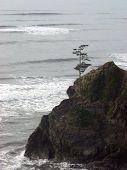 Tree On Rock At Beach