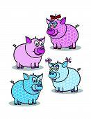Pink And Blue Piggy