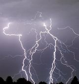 pic of lightning bolt  - a series of lightning bolts striking a grove of trees - JPG