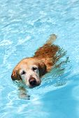 Swimming Dog
