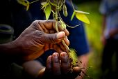 Africa Farming Seedling in hands