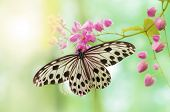 Rice Paper Butterfly on pink flower