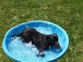 Me And My Pool
