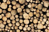 Wooden Cut Logs Background. Pile Of Logs poster