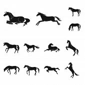 Isolated Object Of Fauna And Mare Symbol. Collection Of Fauna And Stallion Stock Symbol For Web. poster