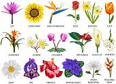 stock photo of species  - Set of 18 colorful most common species of flowers - JPG