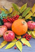 Harvested Pumpkin, Apples, Ashberry And Fall Leaves Around