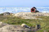 Sled Dog Resting In Front Of Disko Bay in Greenland