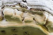 stock photo of spores  - Tree trunk roof mushroom edge detail with spore holes