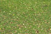 Green Grass In Autumn Park