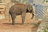 African Animals Elephant