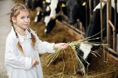 Happy cute little girl in white robe holds hay for cows in long stall.