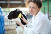 Smiling woman in white robe with small calf looks at camera in big cow farm. Focus on woman.