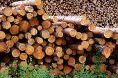 Pine-Protokolle