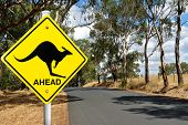 pic of kangaroo  - Kangaroo warning sign on a road in the Australian outback - JPG